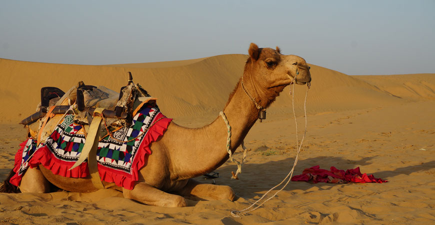 Jaisalmer city door-desert-camel