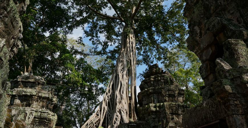 angkor-ta-prohm-