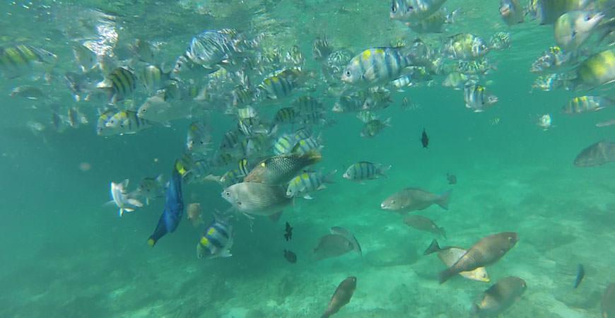 koh-phi-phi-ley-koh-samah-bay-snorkeling-poissons