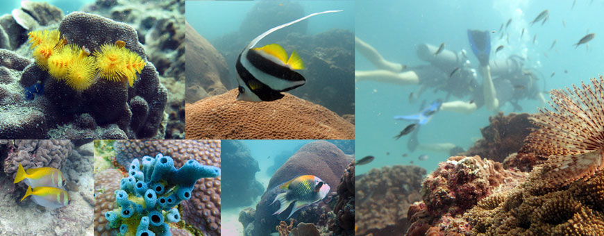 koh-tao-bapteme-plongee-crystal-dive-poissons-exotiques
