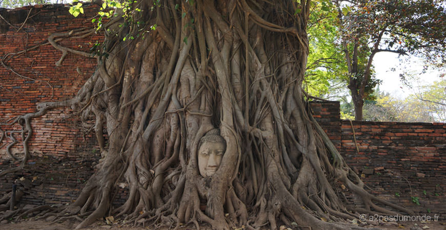 ayutthaya-temple-wat-maha-that-tete-bouddha-arbre-