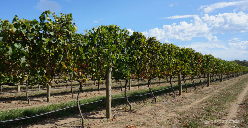 roadtrip-australie-vignobles-peninsule-bellarine