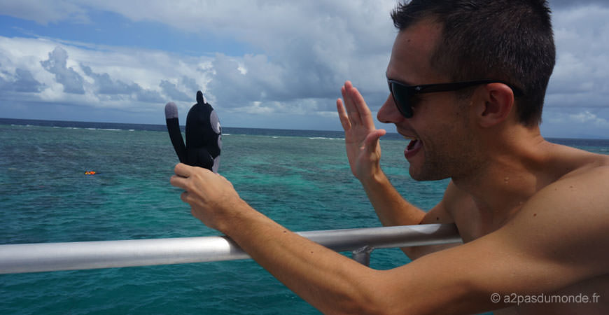 cairns-grande-barriere-corail-kiwi