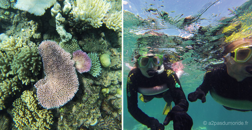 cairns-grande-barriere-corail-snorkeling