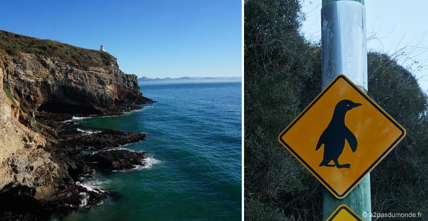 roadtrip-nouvelle-zelande-ile-sud-dunedin-otago-pingouins