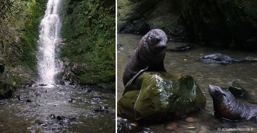 roadtrip-nouvelle-zelande-ile-sud-kaikoura-phoque-ohau-stream
