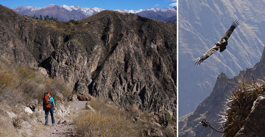 trek-canyon-colca-descente-llahuar-condor