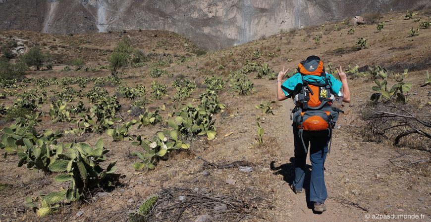 trek-canyon-colca-llahuar-sangalle-cactus