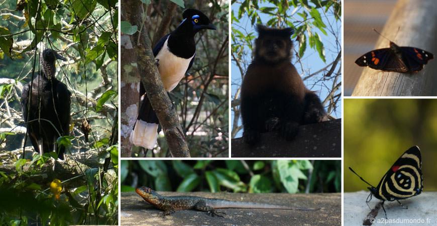 faune-animaux-iguazu-parc
