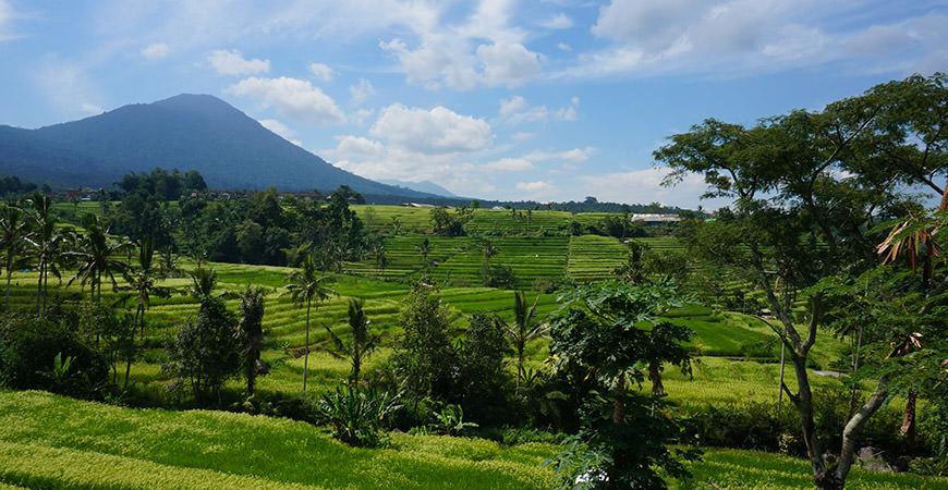 voyage-bali-excursion-riziere-jatiluwih-unesco-1