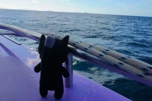 (27) Kiwi n'a même pas peur sur le catamaran !