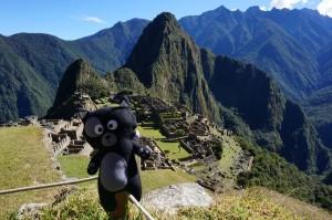 (34) Kiwi tape la pause au Machu Picchu !!
